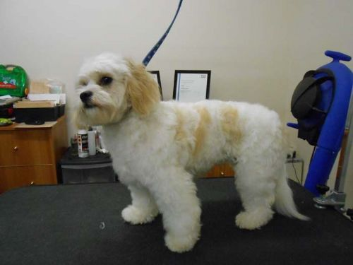 Dog Grooming Eastbourne