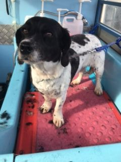 Mobile Dog Grooming Torquay