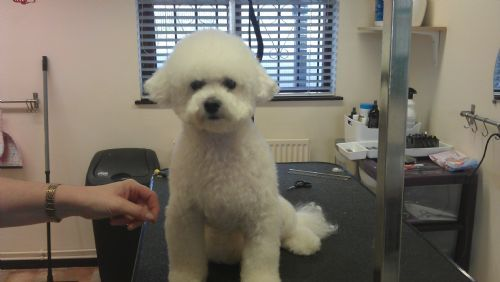 Dog Groomers Park Road Liverpool