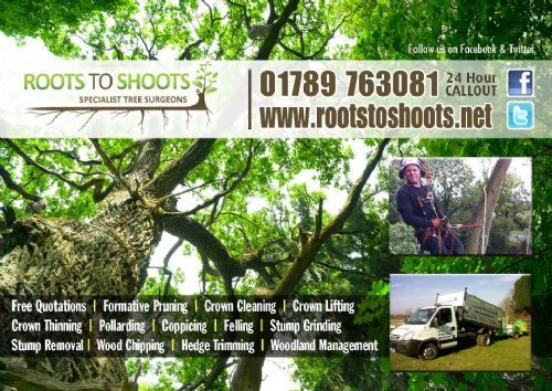 Roots To Shoots Alcester Tree Surgeon Freeindex