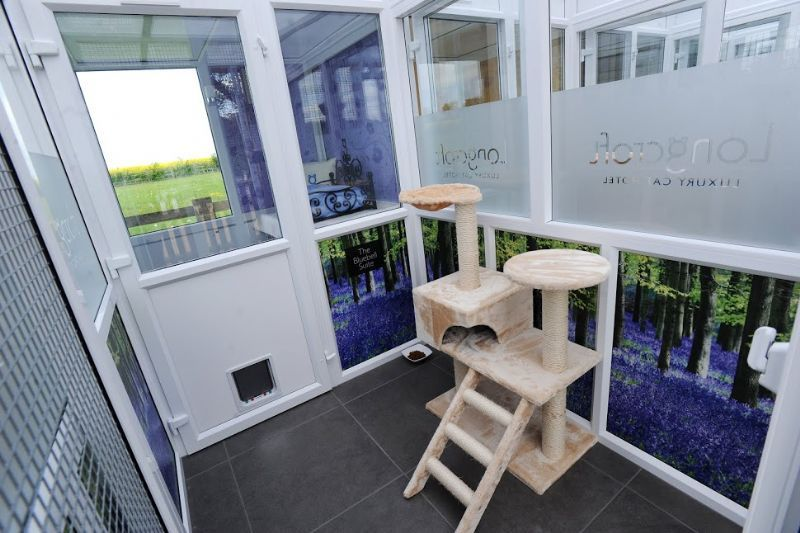 Longcroft Luxury Cat Hotel Cattery In Therfield Royston