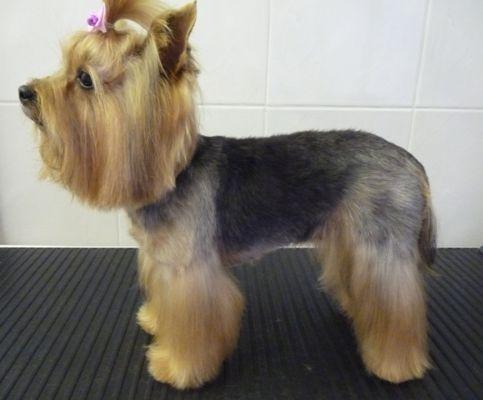 Dog Grooming Ilford