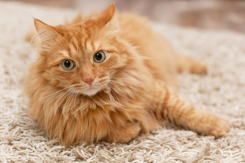 Common cat diseases and symptoms