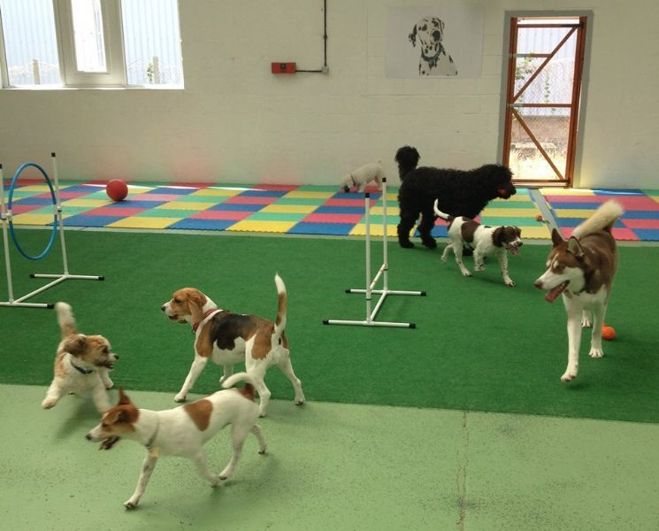 Dog Boarding, Dog Grooming, & Dog Training | Lynchburg VA
