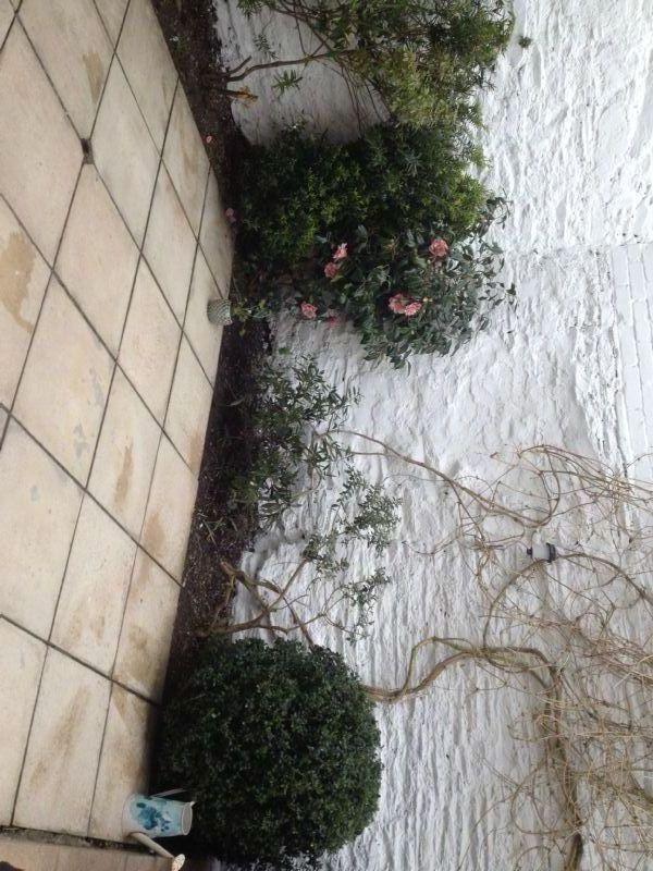 Garden Rescue Home And Garden Maintenance Company In