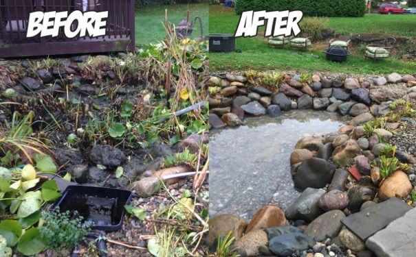 Clean clear ponds pond cleaning company in birmingham uk for Pond maintenance companies
