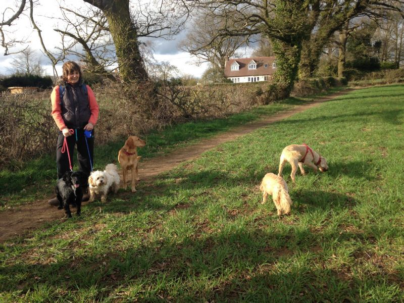 Go Out Paws Coventry Dog Walking Coventry