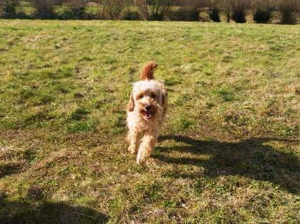 Dog Training Witney