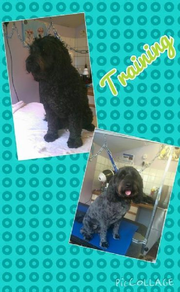 Heavenly Hounds Dog Grooming