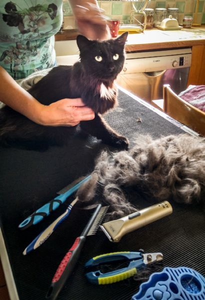 Aussie Pet Mobile Salt Lake | Mobile Grooming for Cats & Dogs