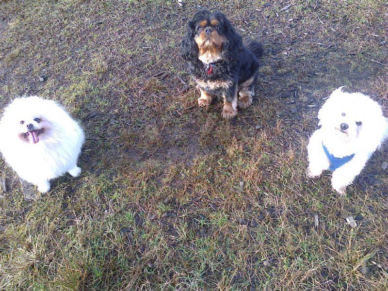 Giffnock Pet Services Glasgow 9 Reviews Dog Walker