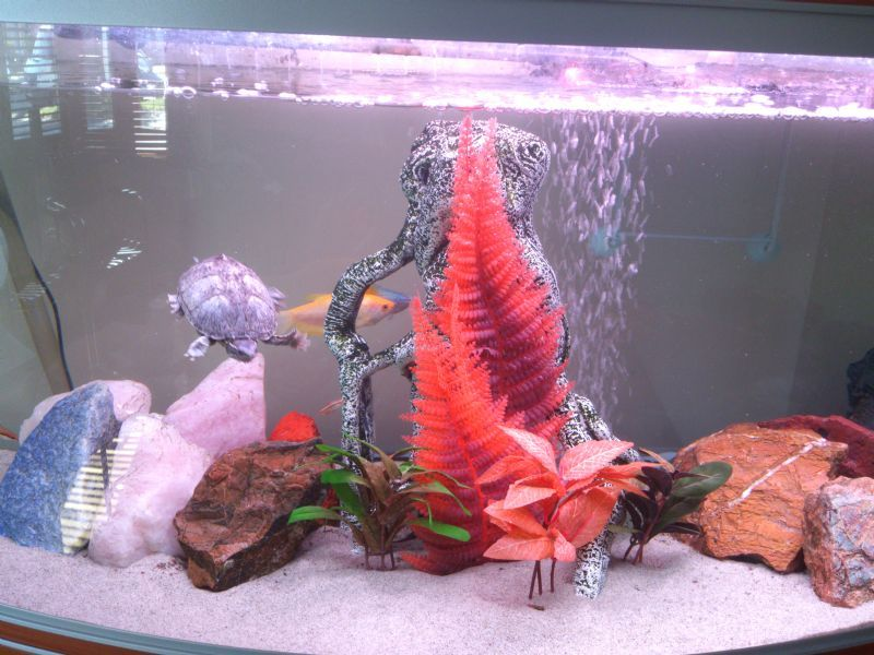 Sa aquatic aquarium cleaning and maintenance company in for Cloudy water in fish tank solutions