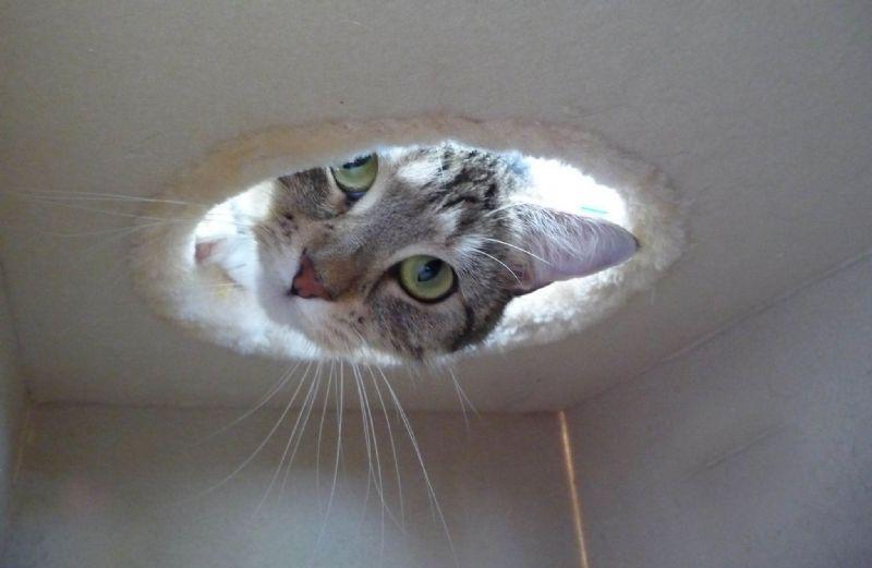 Longcroft Luxury Cat Hotel Cattery In Luton Uk Lu2 8el