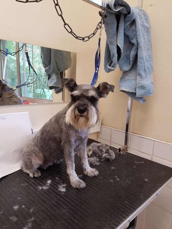 Julie S Dog Grooming