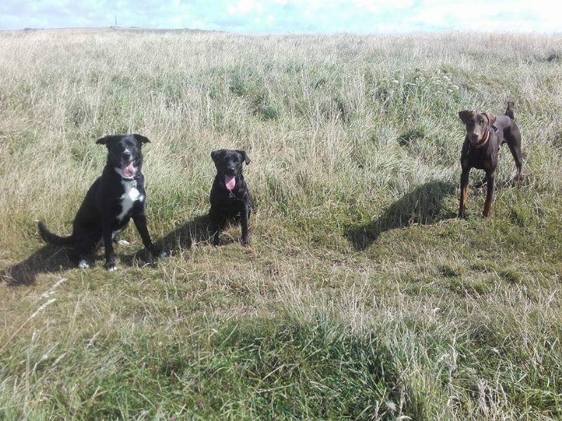 Dog Day Care Weymouth